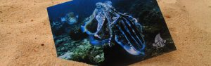 scuba diving print design by 50bar scuba design marketing