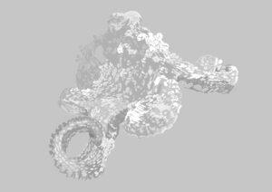 octopus illustration for DAN