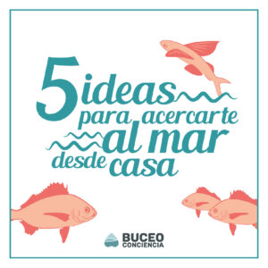 social media content creation for buceo conciencia